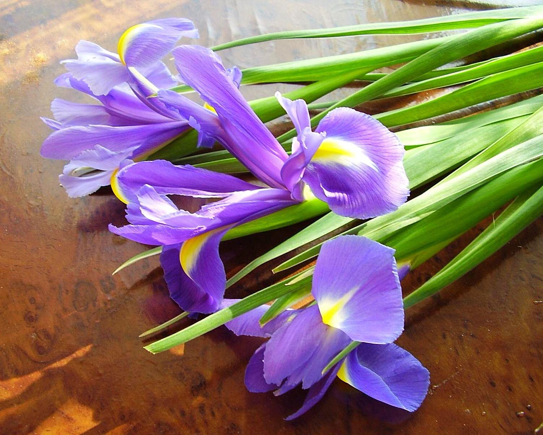 Купить цветы живые ирисы купить цветы спатифиллум